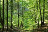 Drewno wiosna. — Zdjęcie stockowe