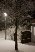 Winter's night tree. — Stock Photo