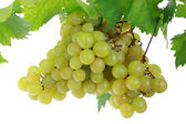 Green grapes. — Stock Photo