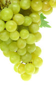 Green grapes on white. — Stock Photo