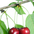Three cherries with leaves. — Stock Photo