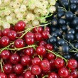Ripe currants. — Stock Photo