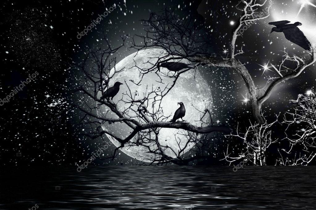 坐在一棵树上的乌鸦擦与满月 — 照片作者 aogatm