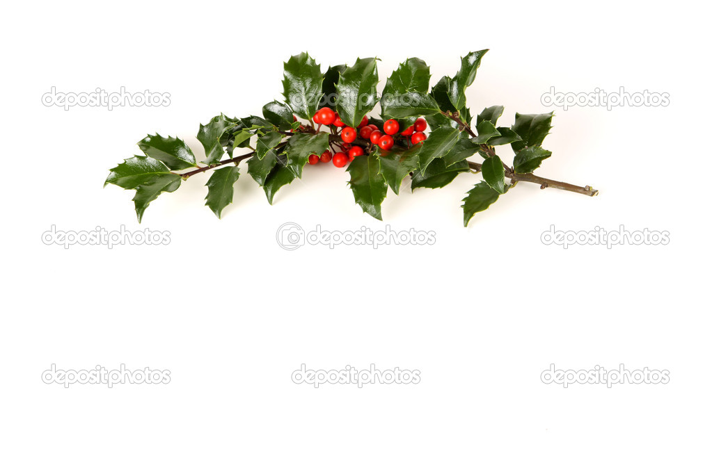 Perfect sprig of holly with bright red berries on white with room for your holiday text. — Stock Photo #3883324