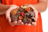 Handful of fragrant bush potpourri — Stock Photo