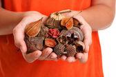 Handful of fragrant bush potpourri — Stock Photo