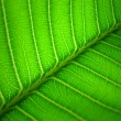 Stock Photo: Leaf details background
