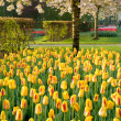 Stockfoto: Tulips and blossom tree
