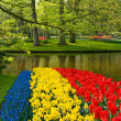 Stockfoto: Tulips daffodils and common grape hyacin