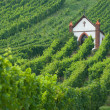Church in vineyard — Stock Photo