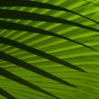 Stock Photo: Abstract palm leafs