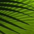 Stock fotografie: Abstract palm leafs