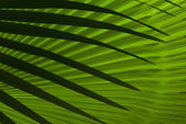 Foglie di palma astratta — Foto Stock