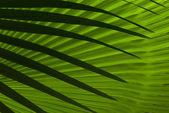 Folhas de palmeira abstrata — Foto Stock