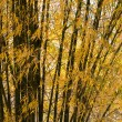 Stock Photo: Bamboo with leafs