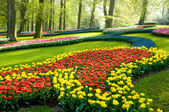 A view in the park keukenhof — Foto Stock