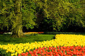 Part of the park keukenhof — Stock Photo