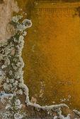 Lichen on stone — Stock Photo