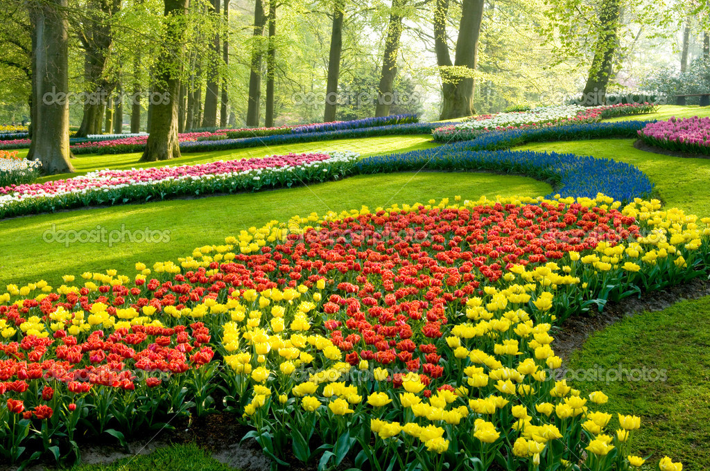 A view in the park keukenhof with different flower and colors — Stock Photo #2801926