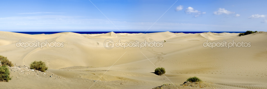 A panorama with plants at maspalomas on gran canaria — Stock Photo #2802243