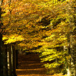 Autumn lane — Stock Photo #2811494