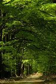 Foresta di primavera — Foto Stock