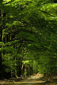 Våren skog — Stockfoto