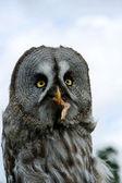 Owl with prey — Stock Photo