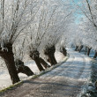 Frozen lane with hoarfrost -  