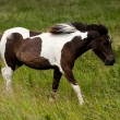 A brown white horse -  