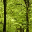 Forest pathway in spring - Stock Photo
