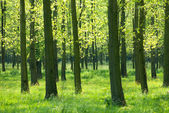 Trees in the grass — Stock Photo
