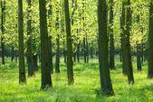 Bomen in het gras — Stockfoto