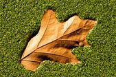Autumn leaf on weed — Stock Photo