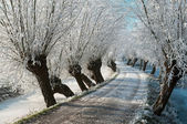 Frozen lane with hoarfrost — Stock Photo