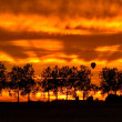 Silhouette trees and hotair balloon - Foto Stock