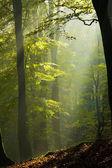 Foresta d'autunno nella nebbia — Foto Stock
