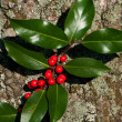Holly leaf sprig berries - Stock Photo