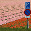 Trafficsigns at a tulipfield — ストック写真