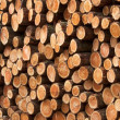 Wood piles — Stock Photo