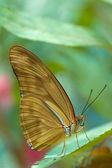 一只棕色的蝴蝶 — 图库照片