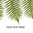 Three ferns — Stock Photo