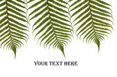 Three ferns — Stock Photo