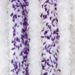 Stock Photo: Purple boa,s