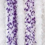 boa violet, s — Photo #3794055