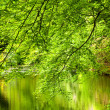 Trees at the river — Stock Photo