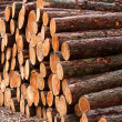 Wood piles - Stock Photo
