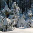 Trees in the winter — Stock Photo #2694687