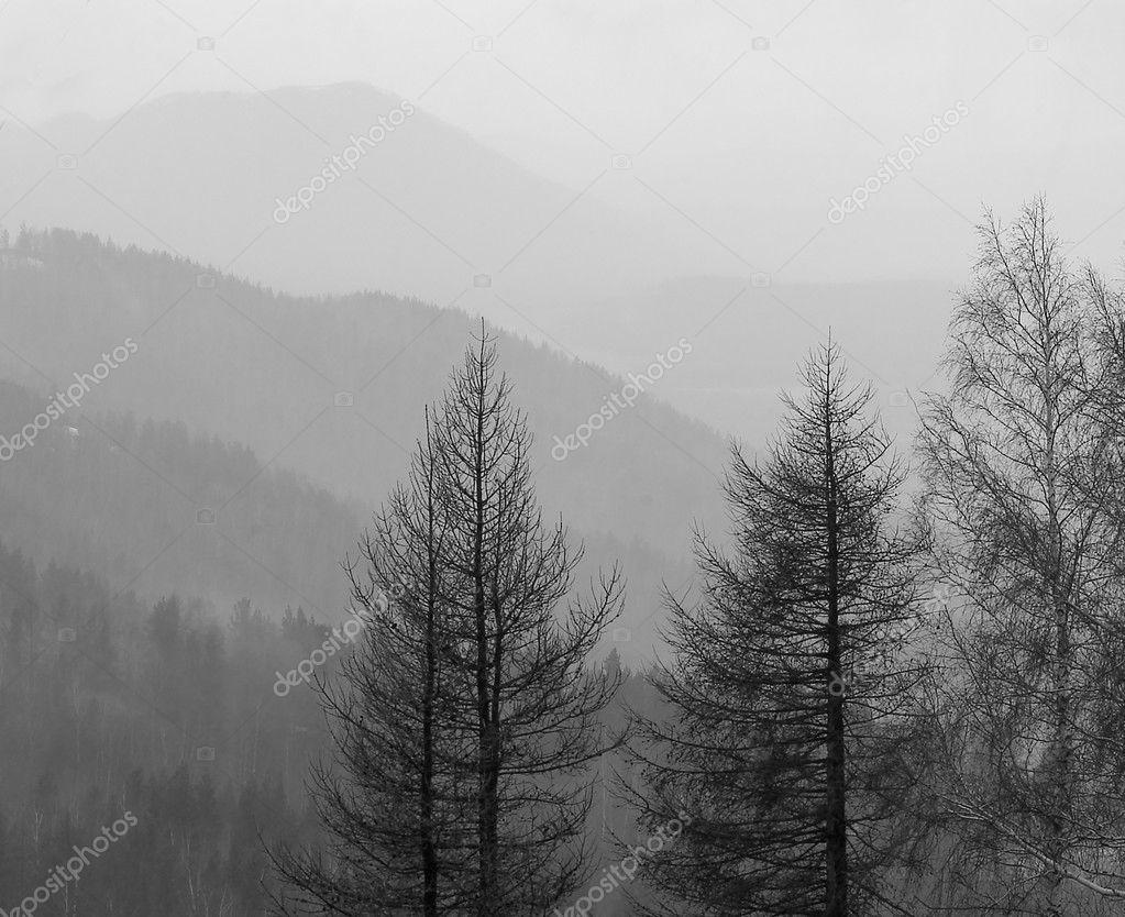 山在雾中,在他们的树木之前— 照片作者 iskarfoto