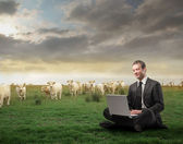 Breeding industry — Stock Photo